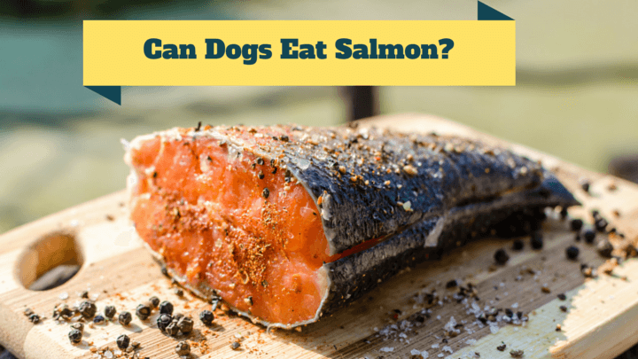 Can Dogs Eat Salmon Raw