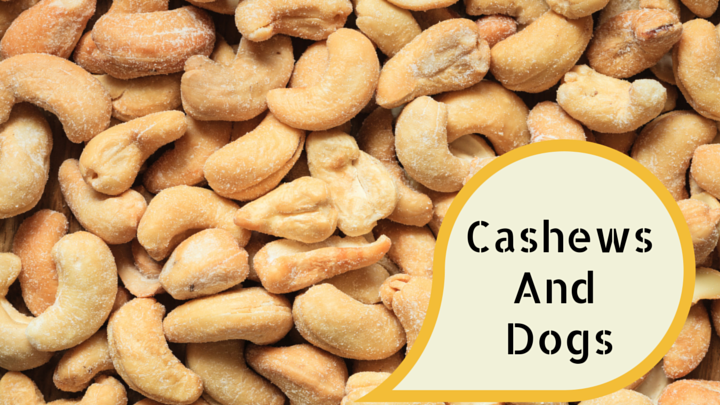 Can A Dog Eat Cashew Nuts