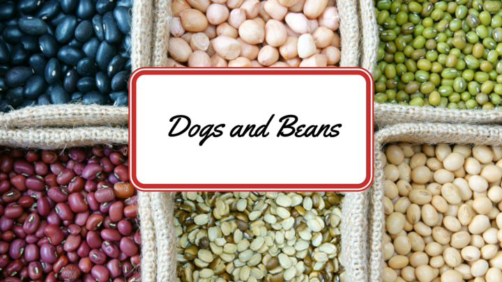 can dogs eat pinto beans
