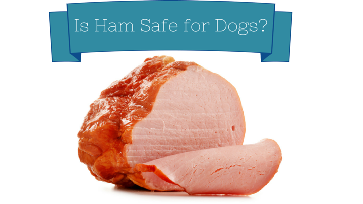 can dogs eat ham