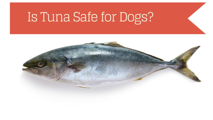 Can dogs eat tuna fish smart dog owners for What do tuna fish eat