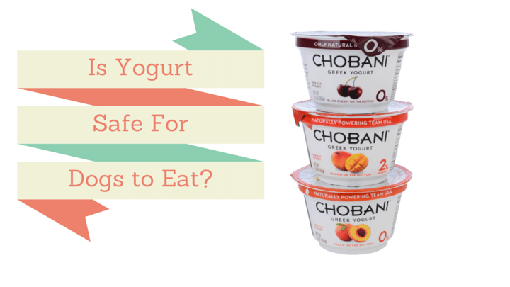 Can Dogs Eat Yogurt? Is it Good for