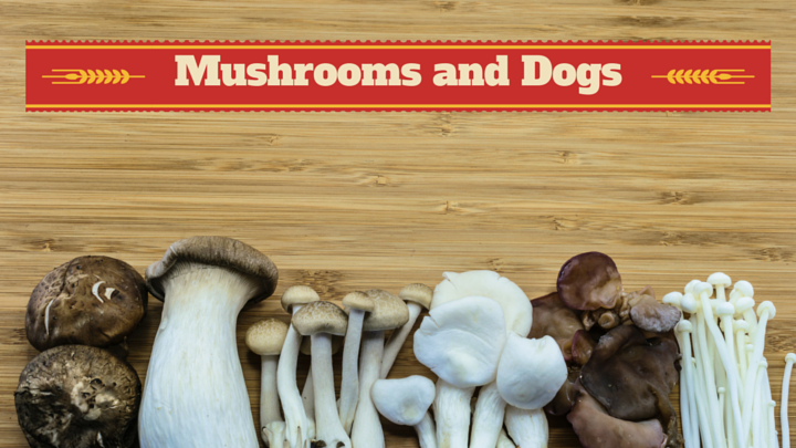 Can Dogs Eat Mushrooms Smart Dog Owners