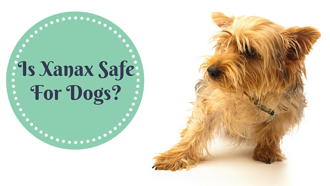 what is diazepam for dogs