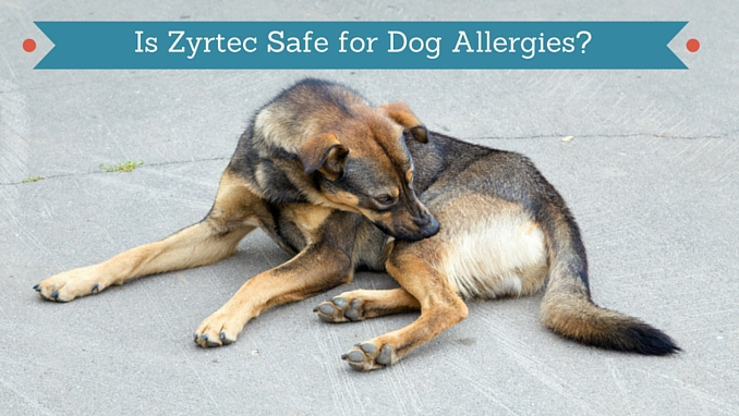 how much zyrtec can i give my dog
