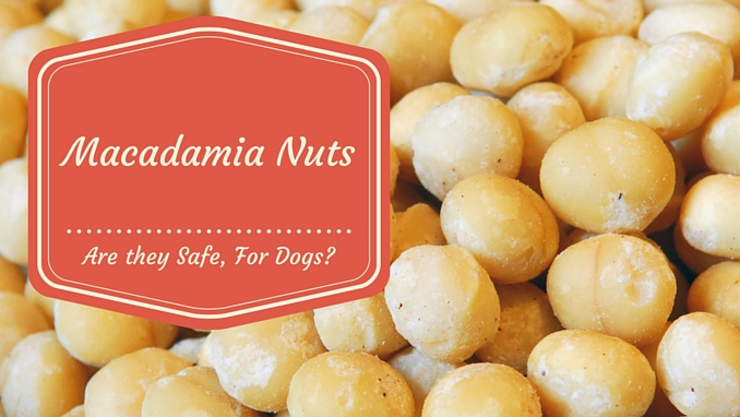 Can I Give My Dog Macadamia Nuts