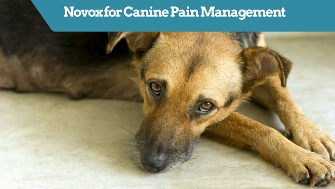 Novox for Canine Pain Management - Smart Dog Owners