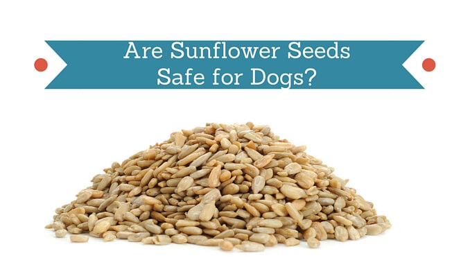 Can Dogs Eat Sunflower Seeds Shells