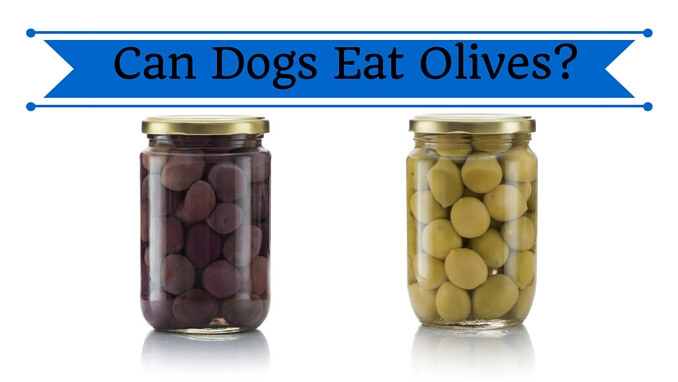 Can Dogs Eat Olives? - Smart Dog Owners