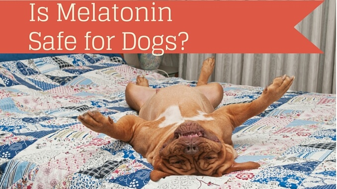 Is Melatonin Safe For Dogs Smart Dog Owners