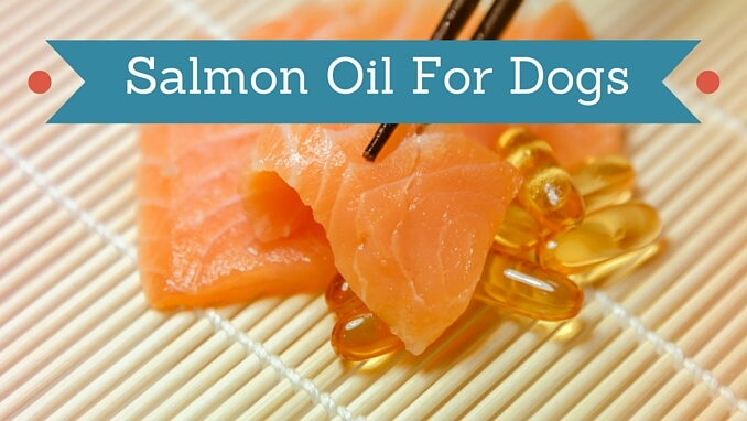 Salmon oil for dogs smart dog owners for Can you give your dog human fish oil capsules