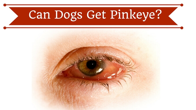 Can You Get Conjunctivitis From A Dog