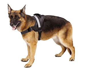 Best Reflective Dog Harness - Reflective Dog Harnesses for Night Play, Walks 1