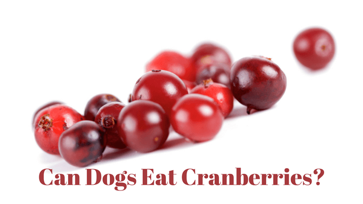 Can Dogs Eat Cooked Cranberries