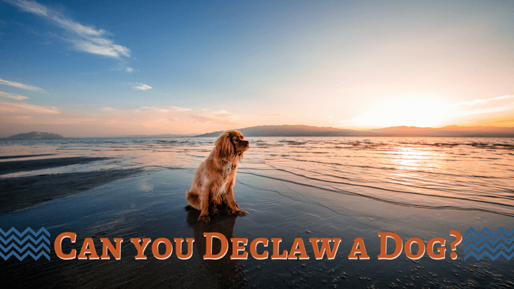 Can You Declaw A Dog Smart Dog Owners