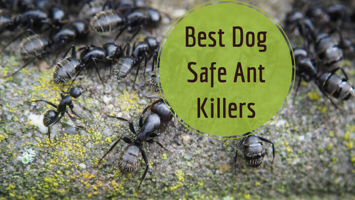 Can Roaches Poison Dog Food