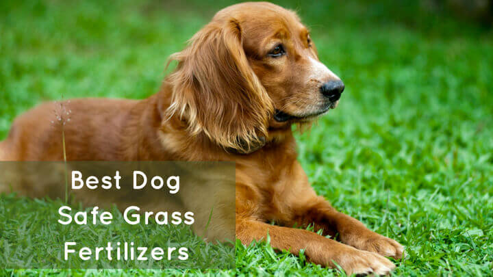 Dog Safe Grass Fertilizers Your Guide To Worry Free