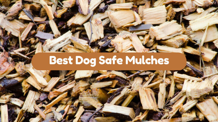 Dog Safe Mulches Choosing The Right