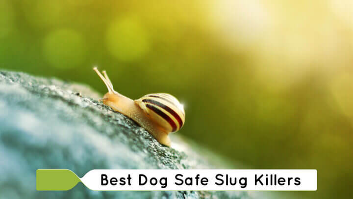 Dog Safe Slug Killers – Get Rid Of Slugs Without Harming Your Pet